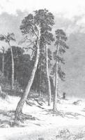Сосны. 1885-1892.