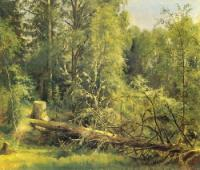 Срубленное дерево.1875