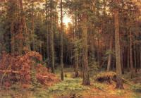 Сосновый лес.1885.