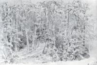 В лиственном лесу. 1880-е.