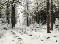 Зима (И.И. Шишкин)