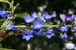 Замечательный цветок