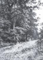 На лесной меже. 1878