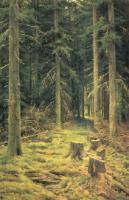 Хвойный лес. 1873