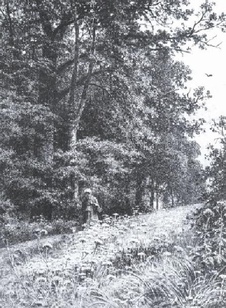 На лесной меже.