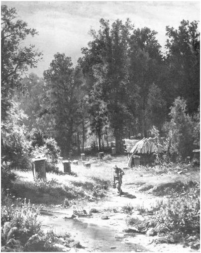 Пасека в лесу.