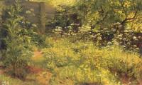 Стынь-трава. Парголово. Этюд. 1884(85).