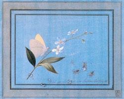 Цветок, бабочка и мухи (Ф.П. Толстой)