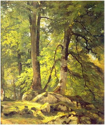 Буковый лес в Швейцарии.