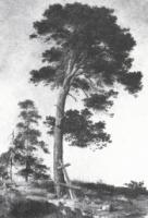 Сосна на Валааме.Этюд.1858