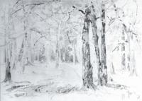 Дорога в лесу. Конец 1870-х - начало 1880-х