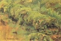 Гнилое дерево, покрытое мхом.Этюд. 1890.
