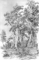 Сосны. 1880-е.