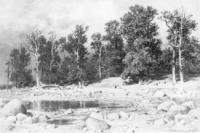 Побережье дубовой рощи Петра Великого в Сестрорецке.1885