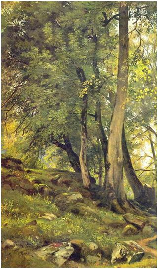 Буковый лес в Швейцарии. Левый фрагмент.
