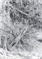 В лесу.Упавшее дерево. 1878