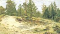 Молодые сосенки у песчаного обрыва. Этюд. 1890.