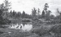Болото. Полесье. 1890.
